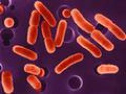 Женщина скончалась во Франции от отравления E.coli