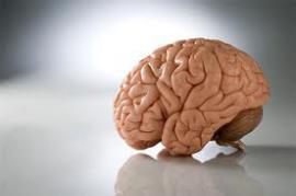 Ученые объединили мозг двух людей