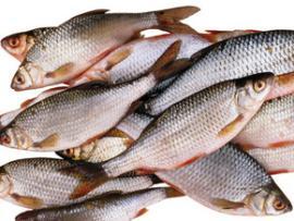 Рыбы помнят события несколько дней