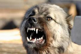 Охотничья собака почти 10 дней охраняла тело убитого в лесу хозяина