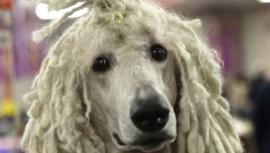 Завтра 10 тысяч собак будут убиты и съедены ради фестиваля в Китае