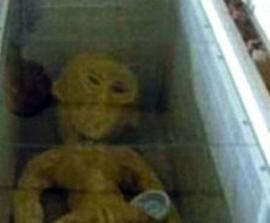 Китаец разместил в сети фотографии найденного им «инопланетянина»