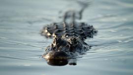 В США мальчик смог вырваться из пасти огромного крокодила