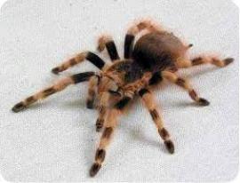 5000 пауков выселили семью из дома