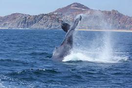 В Мексике кит насмерть придавил канадку